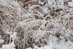 Grass covered with frost Royalty Free Stock Photo