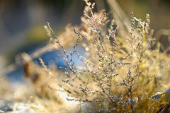Grass covered with frost Royalty Free Stock Photos
