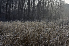 The grass   covered with frost. Royalty Free Stock Image