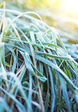 Grass covered with frost. Stock Photos