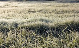Grass covered with frost Royalty Free Stock Image