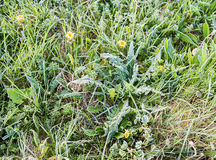 Grass covered with frost Stock Photography