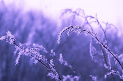 Grass covered with frost Stock Photos