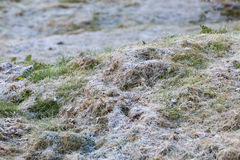 A grass covered with hoarfrost Stock Image
