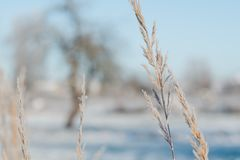 Grass covered with hoarfrost against a background of a winter morning landscape royalty free stock photos