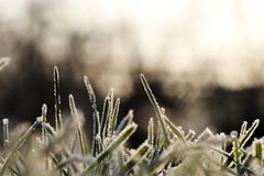 A grass covered hoarfrost in morning light with blurred background creating peaceful atmosphere. Shadows and highlights, contrast. Between dark and light royalty free stock photos