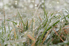 Grass covered with hoarfrost Royalty Free Stock Images
