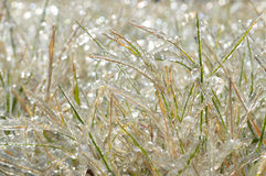 Grass covered with hoarfrost Stock Photo