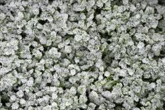 Grass covered with a layer of frost, top view stock photography