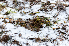Grass covered with snow Royalty Free Stock Image