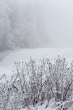 Grass covered with snow on the field. Royalty Free Stock Photos