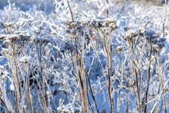 Grass covered with snow and frost stock photo