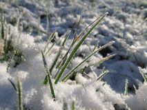 Grass covered with snow Stock Photo