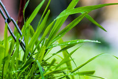 Grass covered with water droplets Royalty Free Stock Photos