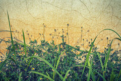 Grass creep on the old Wall Stock Photo