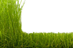 Grass & cut grass Stock Images