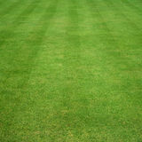 Grass cut with stripes. Lawn of grass cut with parallel stripes Stock Images