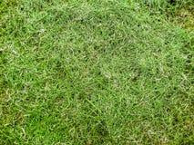 Grass cut texture Stock Image