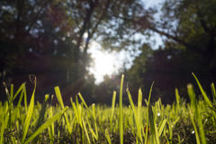 Grass cuttings Royalty Free Stock Photography