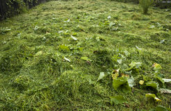 Grass cuttings Royalty Free Stock Image