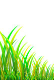 Grass 3D Royalty Free Stock Photography