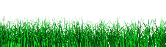 Grass. 3D image of grass on white bacgkround Stock Image
