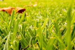 Grass and Meadow on Sunny Day. royalty free stock image