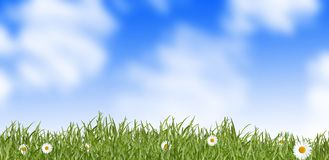 Grass and daisies - meadow Stock Image