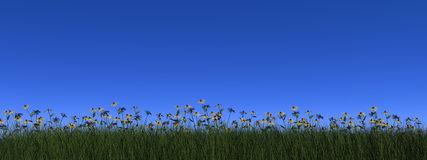 Grass and daisy - 3D render Stock Images