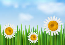 Grass with daisy flower and blue sky. Vector illustration with empty space Royalty Free Stock Photo