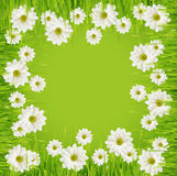 Grass and daisy flower frame Royalty Free Stock Photography