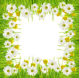Grass and daisy flower frame Stock Photography