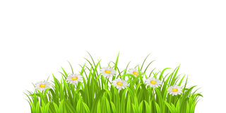 Grass and daisy Royalty Free Stock Images