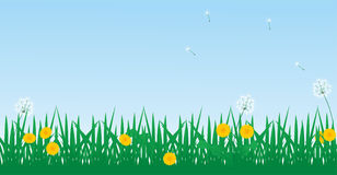 Grass and dandelion. Vector background grass and dandelion Stock Images