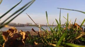 Grass. Danube serbia Royalty Free Stock Photos