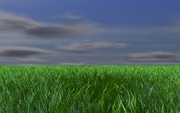 Grass and dark sky Royalty Free Stock Image