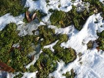 Grass in December under the melting snow. stock photos