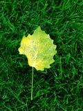 Grass deciduous Stock Images