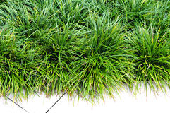 Grass for decor Royalty Free Stock Photos