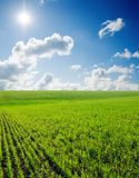 Grass and deep blue sky Stock Photo