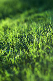 Grass defocused background Royalty Free Stock Photography
