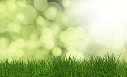 Grass on a defocussed green background Royalty Free Stock Images