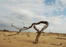 Grass in desert Stock Image