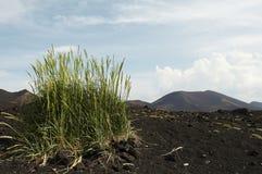 Grass in desert Stock Images
