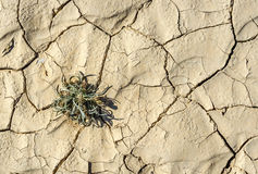 Grass in desert after rain Royalty Free Stock Image