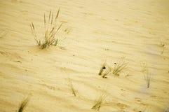 Grass among the desert sand. Rare clumps of grass among the desert sand Royalty Free Stock Photos