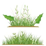 Grass Design Elements Royalty Free Stock Photo