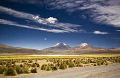 Grass dessert in bolivia near volcano Sajama with snow-covered mountains Royalty Free Stock Photo