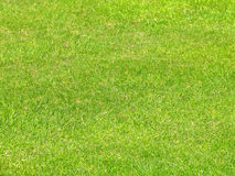 Grass detail Royalty Free Stock Image