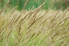 Grass Detail Royalty Free Stock Photo
